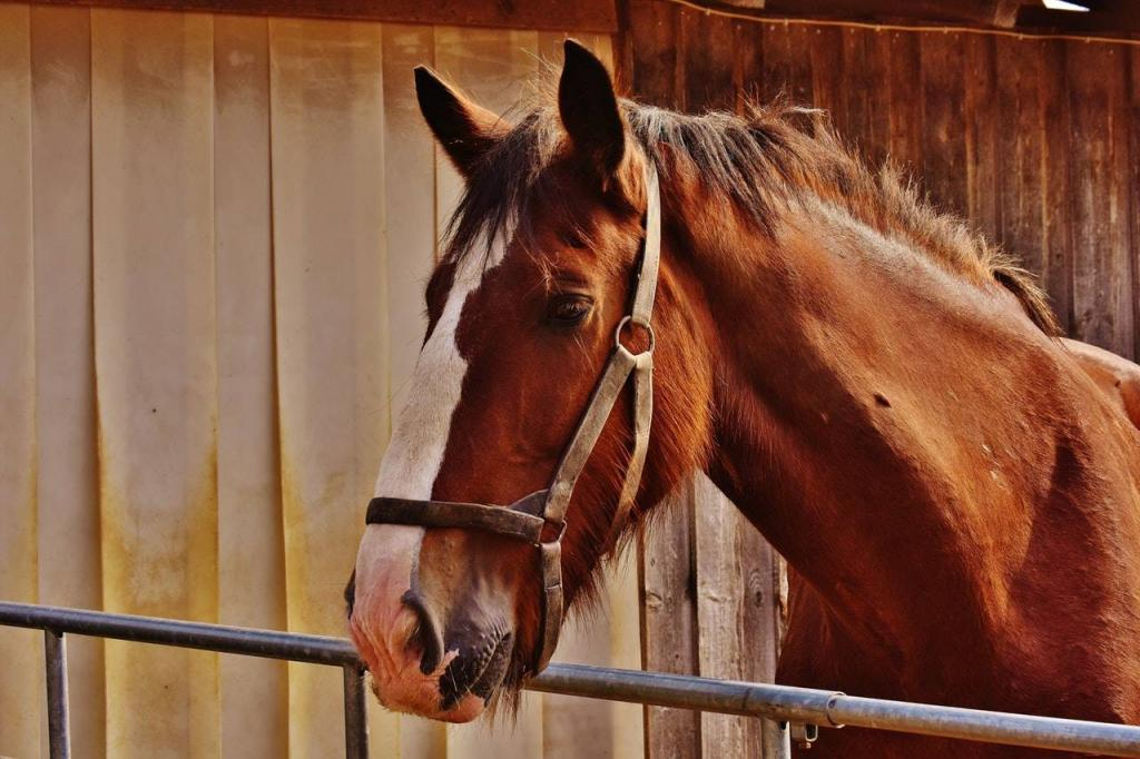 Horse-Remote-Access-CCTV-Stables