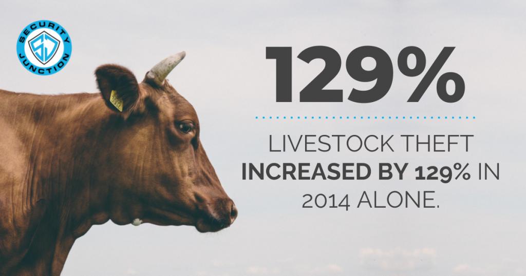 livestock-theft